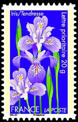 Dites le avec des fleurs ( l'iris )