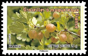 Des fruits pour une lettre verte, Groseilles