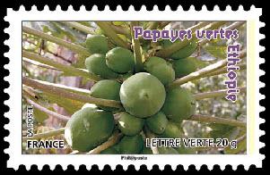 Des fruits pour une lettre verte, Papayes