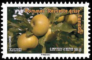 Des fruits pour une lettre verte, Pommes Reinette