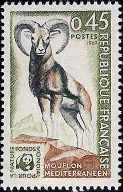 Mouflon méditérranéen