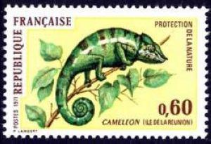 Caméléon (ile de la Réunion)