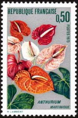 L''Anthurium de la Martinique