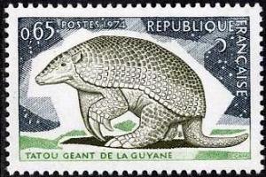 Tatou géant de Guyane