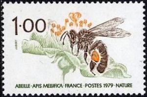 L'abeille (apis mellifica)