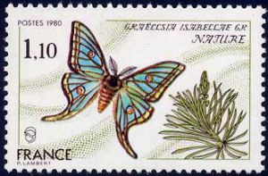 Papillon Graellsia Isabellae