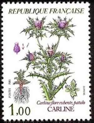 Fleurs de montagne (Carline)