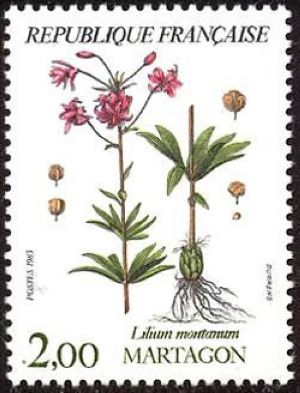Fleurs de montagne (martagon)