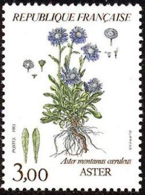 Fleurs de montagne (Aster)