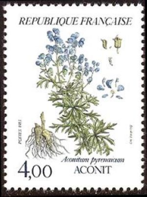 Fleurs de montagne ( Aconit )