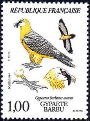 Gypaète barbu (Gypaetus barbatus aureus)