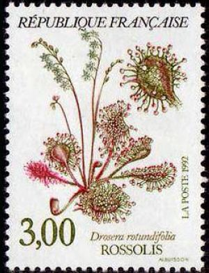 Plantes des marais - Rossolis