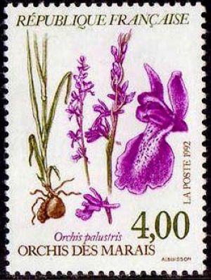 Plantes des marais - Orchis des marais
