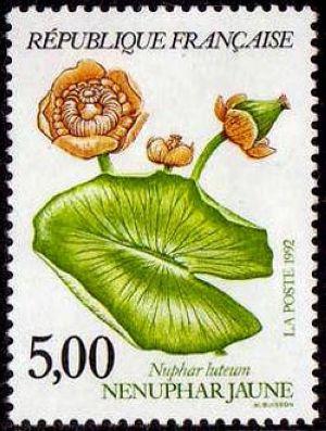 Plantes des marais - Nénuphar jaune
