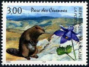 Nature de France, Parc des Cévennes, La marmotte et l'ancolie