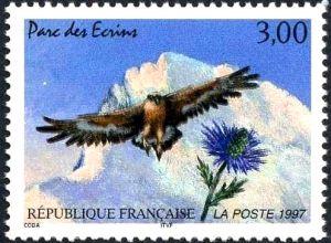 Parc des Ecrins (barre des Ecrins), aigle royal et chardon bleu