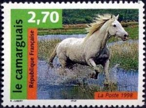 Nature de France : Chevaux, Le cheval de Camargue