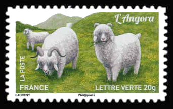 Plus d'un million de chèvres et parmi elles, L'angora